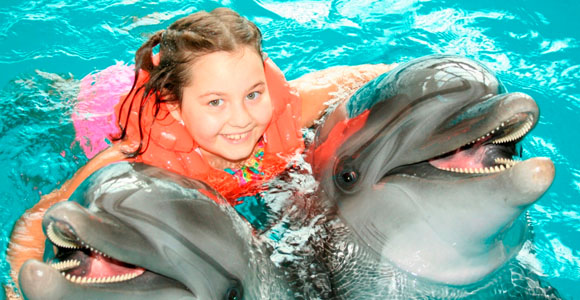 swimming with dolphins4